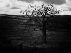 oxenhope3 (olveres) Tags: hiking legacy glass olympus omd canon fd oxenhope black white bw westyorkshire