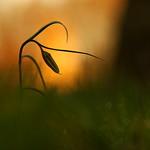 A l'aube - At dawn. thumbnail