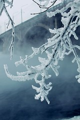 Silence frozen (mariakorzennikova) Tags: winter snow frost brige trees cold fog river