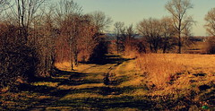 Droga. (andrzejskałuba) Tags: poland polska pieszyce dolnyśląsk silesia sudety europe panasonicdmcfz200 lumix widok view krajobraz color cień sky shadow natura nature natural natureshot natureworld niebo niebieski orange pomarańczowy yellow żółty drzewa droga road earlyspring trawa grass trees tree pole field 100v10f 1000v40f 1500v60f