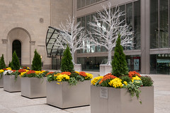 Lovely Display of Yellow and Orange (Jocey K) Tags: sonydscrx100m6 triptocanada ontario canada autumn toronto city buildings architecture trees christmasdecorations