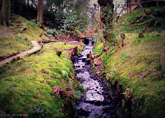 The Wee Burn (Rollingstone1) Tags: weeburn burn balloch scotland riverleven grass water stream trees hill path rock stones scene nature outdoor art artwork tree garden wood forest landscape