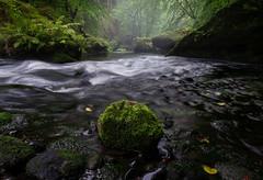 Kamnitzklamm (Philipp Zieger - www.philippzieger-photographie.de) Tags: river forest bohemianswitzerland wald regen böhmischeschweiz fluss tschechien kamnitz natur landschaft