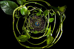 recovery (thefeverhead) Tags: earth nature soil vines swirl nest healing sickeness environment planet climatechange deforestation pollution fossilfuels oilspill keepitintheground epa donaldtrump savetheearth oneearth greenenergy renewables renewableenergy depression loop flashphotography conceptual conceptualphotography