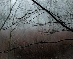misty monday (bidutashjian) Tags: misty foggy mist fog trees woods forest branches rain rainy haze nikon d3500 peaceful soft gray quiet raindrops
