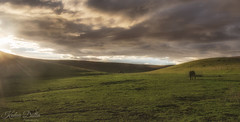 Dinner time (wandering indian) Tags: green hill rain clouds california kedardatta landscape nature sunset cloudsstormssunsetssunrises