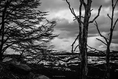 And when you lose control (.KiLTRo.) Tags: kiltro cl chile magallanes patagonia tierradelfuego trees forest woods landscape clouds sky nature contrast snow wind