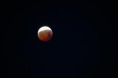03_Super_Wolf_Blood_Moon_Eclipse_01_19 (Marcus.Ghil) Tags: lunarossa superluna superwolfbloodmoon supermoon moon eclipse bloodmoon wolfmoon