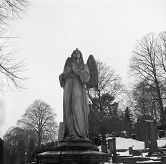 Östra Kyrkogården (rotabaga) Tags: sverige sweden svartvitt göteborg gothenburg lomo lomography lubitel166 mediumformat mellanformat twinlens fomapan 120 6x6 östrakyrkogården kyrkogård cemetery