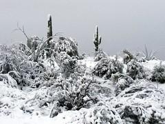 legend-trails-1902220723 (nagerfran) Tags: cactus winter desert storm snow cold freeze arizona scottsdale tontonationalforest