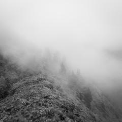 Solitary (Chamikajperera) Tags: hirikatuoya balangoda mist canon landscape bnw black white squre travel