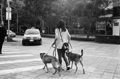 🐕🐕 (Janeprogram) Tags: bnwphotography blackandwhite пленка 35mm filmphotography kentmere400