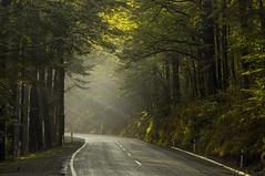 Winding Roads (Matt Champlin) Tags: fbf friday flashback life road nature sun challenge move movingforward landscape newzealand travel exotic winding windingroad canon 2018 amazing green rainforest