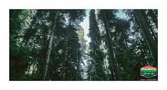 TREES-OF-MYSTERY-CANOPY-HDR-900WX489H-300PPI-2019-04011920190113_16042520190113_160425EDIT-02-as-Smart-Object-1 ©Cody Jacobson-ZEN MOUNTAIN PHOTOGRAPHY & GRAPHIC DESIGN (codyjacobson@zenmountainmedia.com) Tags: treesofmysterycanopyhdr4532wx2460h300ppi2019 zen mountain logo tshirt poster design photohsop digital art portfolio landscape photography jedadiah smith redwoodnational forest ca nikon samsung galaxy s8 canon t6i retouching aurorahdr photoshop camera raw redwoods trees beautiful green evening hiking nature love winter grove oldgrowth colors colorful tourism travel oregon california 2017 outdoors picoftheday photo 2018 exploringtheartofimagination zenmountainmediacom