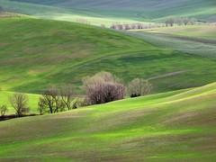 Val d'Orcia (Jolivillage) Tags: jolivillage paysage landscape paesaggio toscane tuscany toscana pienza vert green verde printemps spring primavera italie italia italy europe europa picturesque geotagged