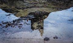 Reflection (James Anley) Tags: reflection water greenan castle ayrshire ayr seaweed scotland