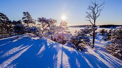 Tulikallio, East-Helsinki, Finland. (Esa Suomaa) Tags: winter helsinki scandinavia suomi snow forest trees finland olympusomd