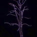Christmas Lights -- Longwood Gardens (PA) December 2018