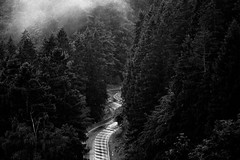 Waldstraße (Gruenewiese86) Tags: harz tour canon6d wald wälder waldlandschaft wandern nebel nebelwald strase street harzlandschaft canon 6d exploreharz explore schwarz weiss blackandwhite