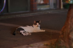 Brown Tabby Cat (Flexible Negativity) Tags: 猫 cat 貓 meow ねこ caturday nuko k70 pentax browntabby