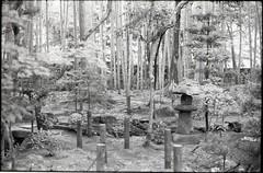 (✞bens▲n) Tags: leica m4 kodak tmax 400 summilux 50mm f14 film blackandwhite analogue kyoto japan trees bamboo japanese garden lantern