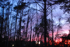Colorful Sky This Evening. (dccradio) Tags: lumberton nc northcarolina robesoncounty outdoor outdoors outside nature natural march spring springtime sunday sundayevening sundaynight evening silhouette tree trees treebranch branch branches treebranches treelimb treelimbs sky colorful colorfulsky sunset sunsetsky clouds pinkclouds bluesky nikon d40 dslr scenic woods wooded forest beauty beautiful pretty landscape
