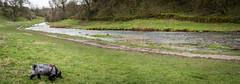 Luna at Play (jayteacat) Tags: luna lunaatplay riverbradford youlgrave youlgreave derbyshire dog cockerspaniel nikond810