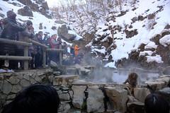 How about a photo of this? (timtram) Tags: japan jigokudani monkey monkeys snow snowmonkeypark snowmonkeys winter yamanouchi