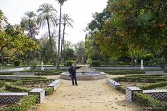 20190331-Unelmatrippi-Parque-Maria-Luisa-DSC0634 (Unelmatrippi) Tags: sevilla seville espanja spain parquedemaríaluisa maríaluisapark europe eurooppa