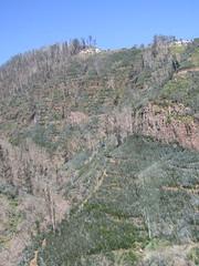 IMG_8053 (wallygrom) Tags: madeira funchal monte botanicalgarden jardimbotânicodamadeira cablecar teleferico