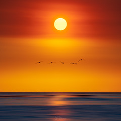 Firefly (Jim Patterson Photography) Tags: california coast nature outdoors pelicans sun santacruz coastline coastal pacificcoasthighway sunset pacificocean water waves golden hour montereybay ocean oceanshore shoreline jimpattersonphotographycom jimpattersonphotography