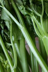 ORGANIC CELERY (WILLPOWER STUDIOS) Tags: celery organic vegetable vegan healthy 2019 juicing