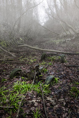 Where once we Raced (John Joslin) Tags: decay forest trees abandoned old deralict forgotten light car engine plants mud wheels winter fog foggy green branches stuck leaves