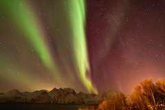 Northern Lights over Lyngen Alps (pboolkah) Tags: canon canon5d northernlights norway lyngenalps mountains water snow stars night sky idyllic alps trees snowcapped
