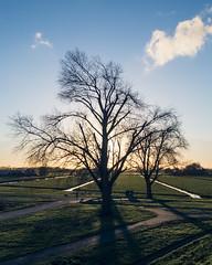 Tree silhouettes (Michel van Zalk) Tags: silhouette silhouettes tree landscape sunset photography trees sky flat field gras clouds blue green orange black shadow light sun horizon netherlands nederland holland dutch nl