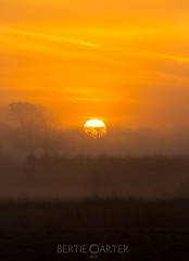 Land of the rising sun (bertie.carter.photography) Tags: sunrise yellow layers mist sussex colourful mood landscapes landscape