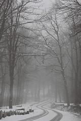 Into the fog (☁ ▅▒░☼‿☼░▒▅ ☁) Tags: minolta xd7 ilford xp2 400 blackwhite black white tamron sp 90mm mecsek fog snow winter