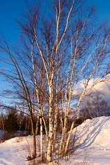 Late Winter Light (Northern Wolf Photography) Tags: 14140mm 14mm clouds em5 light olympus shadow sky snow trees winter greenville maine unitedstatesofamerica us