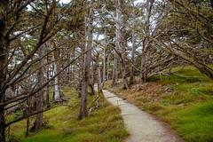 Forest path (Snap Man) Tags: california californiacentralcoast carmel carmelbythesea cypressgrovetrail montereycounty pointlobosstatenaturalreserve byklk path