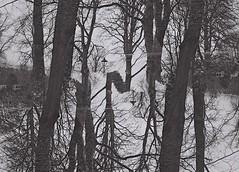 Strange Island, Inverness, April 2016 (Mano Green) Tags: ness islands trees inverness river double exposure black white april spring scotland uk film ilford xp2 super 400 35mm canon eos 300 40mm lens