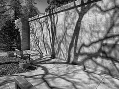 (mahler9) Tags: jaym april 2014 cemetery mountauburncemetery shadow bw blackwhite blackandwhite monochrome