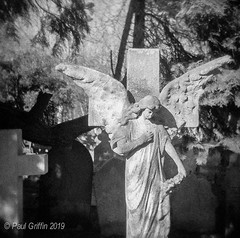 Highgate Cemetery 2 (global griff) Tags: 120film bwfilm england holga negscans monuments tmax400 london cemetary tombstone analogphotography