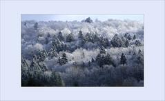 angezuckert (Thomas Rausch (!)) Tags: zucker zucchero winter wald forrest schnee snow sugar landschaft landscape
