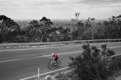 Struggling (Anthony Kernich Photo) Tags: adelaide australia southaustralia sa windypoint lookout view scene street road streetphotography cycling cyclist bike biking struggle blackandwhite blackwhite bw mono monchrome greyscale spotcolour spot olympus olympusem10 olympusomd lumix microfourthirds onecolour spotcolor outside outdoor