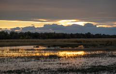 Camargue Sunset (MrBlackSun) Tags: blackbull black bull camargue guardian gardian southfrance nikon d850 nikond850