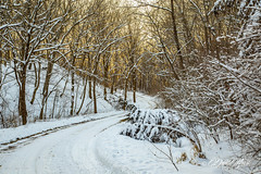 Winter Road (david.horst.7) Tags: road rural timber trees forest snow winter