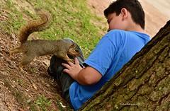 boy and nature  DSC_0792 (richardsscenery) Tags: squirrel greysquirrel fur furryanimal claws furrytail pinetree wildlife boyandanimal blueshirt hermannpark houston texas nikoncamera gods creation