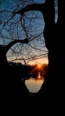 CAN YOU SEE THE SUNSET IN A DARK FRAME? (novaexpress93) Tags: novaexpress93 sunset sunbeamsun sundown dusk evening lake trees nature backlight branches water moor bog natureresort twilight