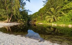 Reflections / Отражения... (dmilokt) Tags: природа nature пейзаж landscape море sea пляж beach песок sand пальма palm небо sky облако cloud dmilokt nikon d850