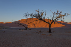 _RJS4381 (rjsnyc2) Tags: 2019 africa d850 desert dunes landscape namibia nikon outdoors photography remoteyear richardsilver richardsilverphoto safari sand sanddune travel travelphotographer animal camping nature tent trees wildlife